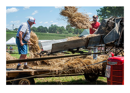 Photo showing wheat going into a thresher