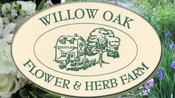 logo for willow oak flower and herb farm