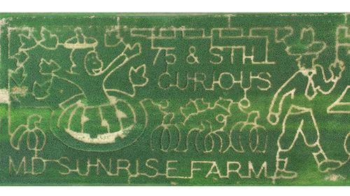 The 8 Acre Corn Maze at MD Sunrise Farm