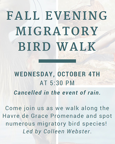 Evening Migratory Bird Walk flyer