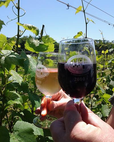 Basignani Winery Vineyard