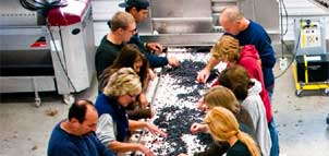 Workers at Winery