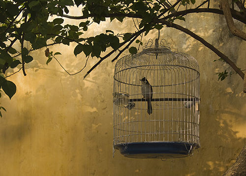 photo of a caged bird