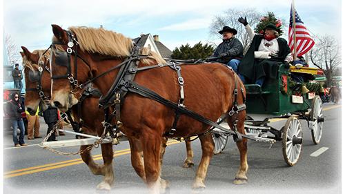 Belgian Draft Horses pull wagon in Lisbon Christmas Parade