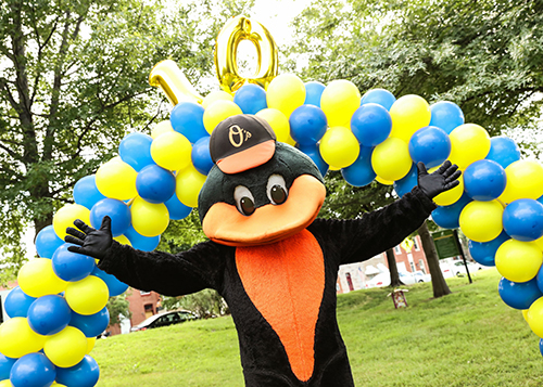 The Orioles Bird with Blue and Yellow Ballons