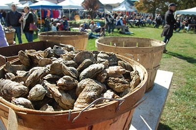 Oysters at Oysterfest