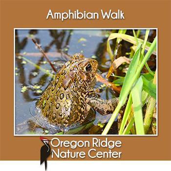 Amphibian Walk Poster