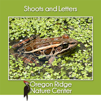 Shoots and Letters - Frogs