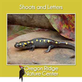 Shoots and Letters - Salamanders