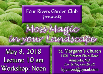 Moss Magic in Your Landscape Flyer