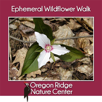 Ephemeral Wildflower Walk