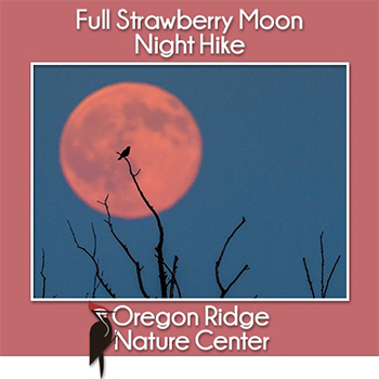 Full Strawberry Moon Night Hike