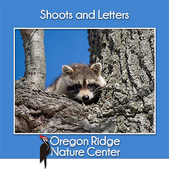 Shoots and Letters - What lives in the trees?