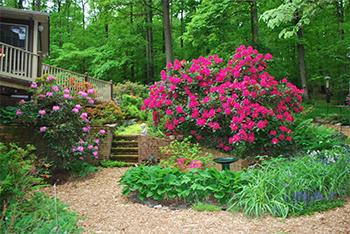 Rausch Woodland Gardens