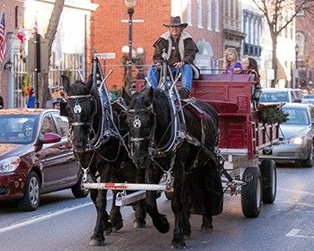 Horse-drawn Carriage Rides in Frederick