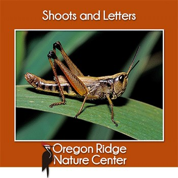 Shoots and Letters – Insects Poster