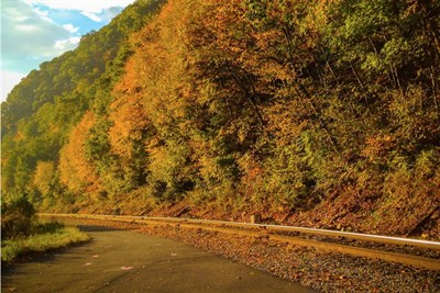 Discover the Fall Colors of Allegany County