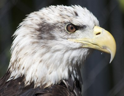 Red, White & Zoo Enrichment Day