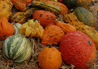 A bounty of gourds