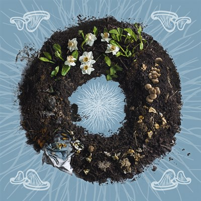 A ring of dirt and mushrooms.