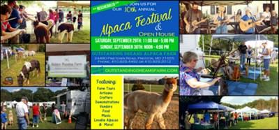 Alpaca Fall Festival Poster