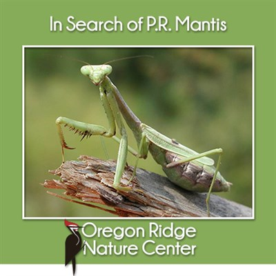 In search of P.R. Mantis