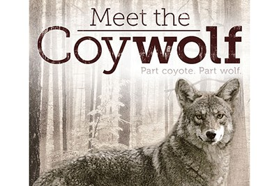 Meet the Coywolf Cover Art