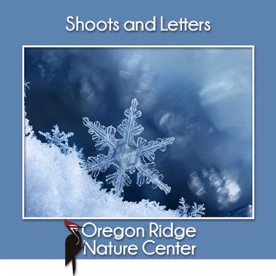 Shoots and Letters - Snow!