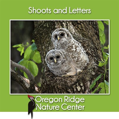 Shoots and Letters - Owls