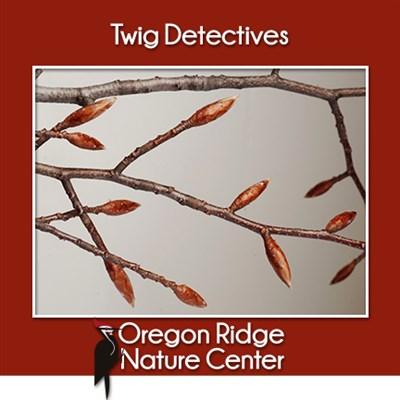 Twig Detectives