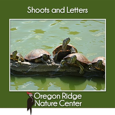 Shoots and Letters – Turtles poster