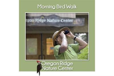 Morning Bird Walks poster
