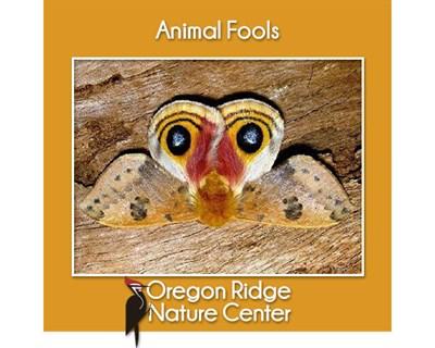 Animal Fools poster