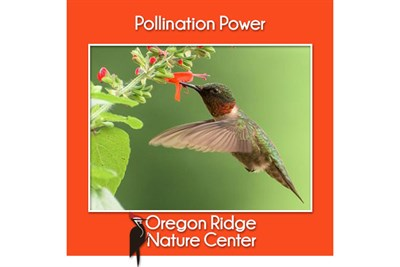 Pollination Power poster