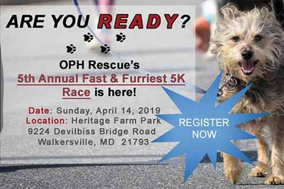 Fast & Furriest 5K/1M Race Poster
