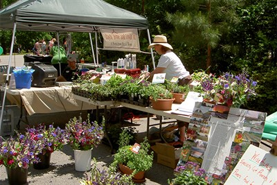 Spring Flowers at the Makers Market