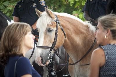 "Baltimore City Police Horse Dino, or ""Big D"""