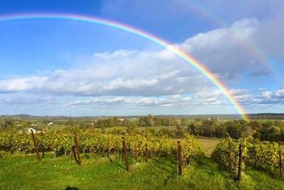 Catoctin Breeze Vineyard with a rainbow overhead