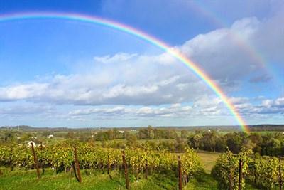 Catoctin Breeze Vineyard with rainbow overhead