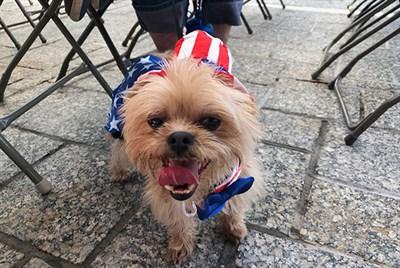 A proud pet enjoying its patriotic costume