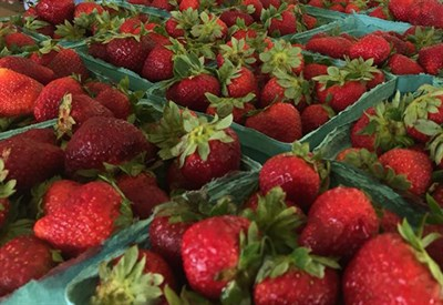 Strawberries for the Festival