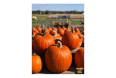 Pumpkins at Summers Farm