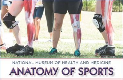 Anatomy of Sports at the Medical Museum