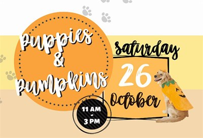 Puppies & Pumpkins poster