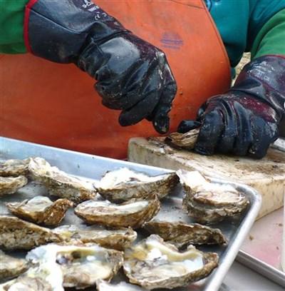 Oyster & Brew Festival food