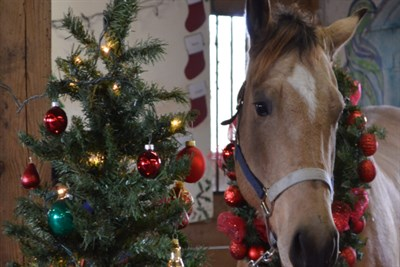 A horse stands next to a Christmas Tree