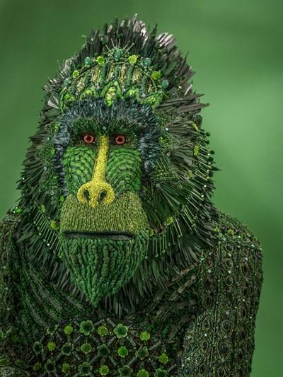 Green Monkey-Mandrill by Johanna Burke