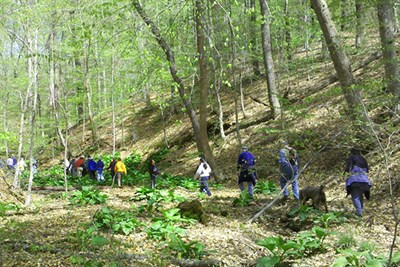 Group walking in the woods