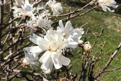 Flowering Shrubs at Banneker Park