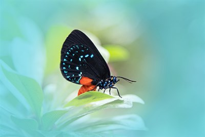 A butterfly against a mint colored background
